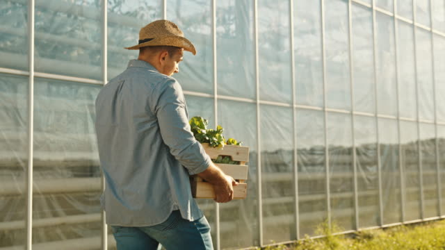 slo mo man with a hat carrying crate full of fresh vegetables - ecosystem stock videos & royalty-free footage