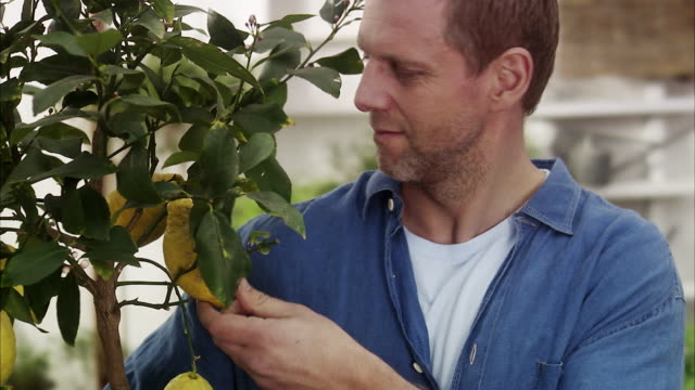 man with a lemon tree, sweden. - sideways glance stock videos & royalty-free footage
