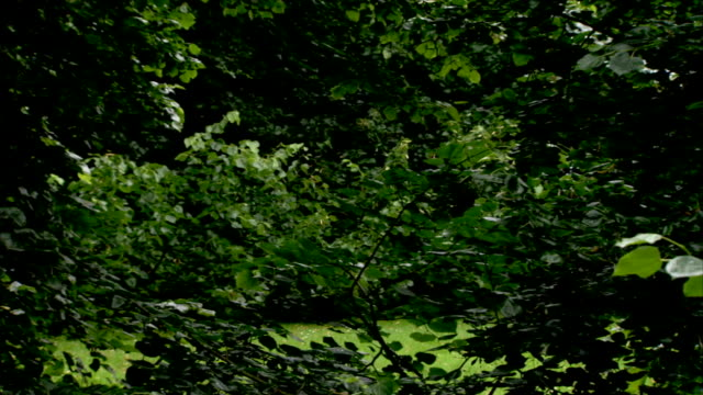 a man with an electronic baseball cap wanders near trees. - baseball cap stock videos & royalty-free footage