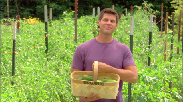 man with basket of organic cucumbers - see other clips from this shoot 1425 stock videos and b-roll footage