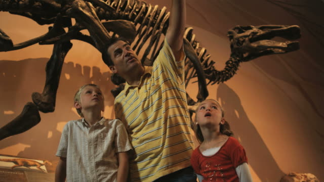 ms man with daughter (8-9) and son (10-11) in natural history museum, lehi, utah, usa - lehi stock videos & royalty-free footage