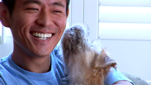 man with dog - pet owner stock videos & royalty-free footage