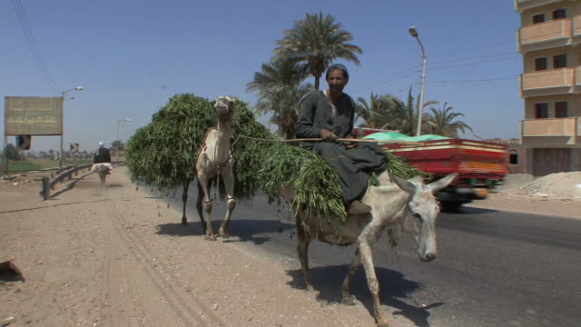 WS PAN Man with donkey and camel on highway, Assyout, Egypt
