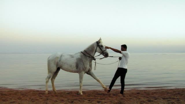 WS Man with horse on beach, Dahab, Sinai, Egypt