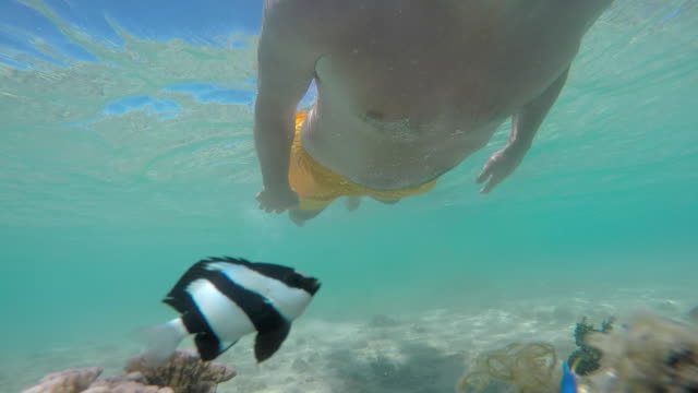vidéos et rushes de man with mask and snorkel under the sea with fish - dom tom