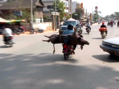 man with pig on motorcycle / motorbike - delivering stock videos & royalty-free footage