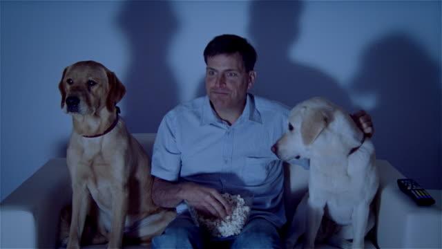 vídeos de stock, filmes e b-roll de ms, man with two dogs sitting on sofa, watching tv - só um homem maduro