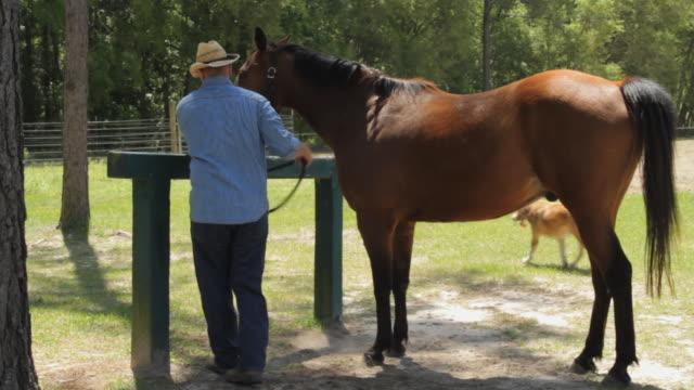 vidéos et rushes de ws man with tying horse to pole / madison, florida, usa - couleur et motif du pelage