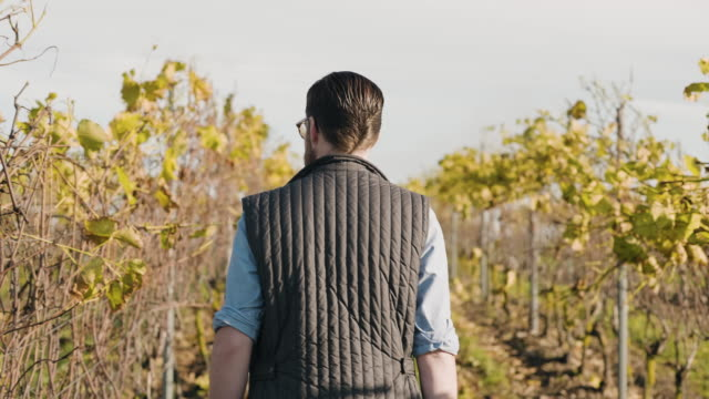 man working at a small vineyard in scandinavia - behind stock videos & royalty-free footage