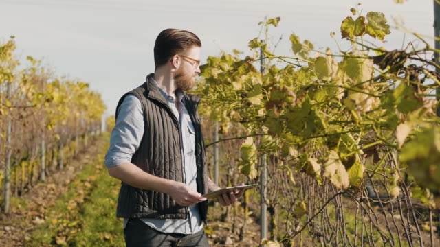 man working at a small vineyard in scandinavia - wireless technology stock videos & royalty-free footage
