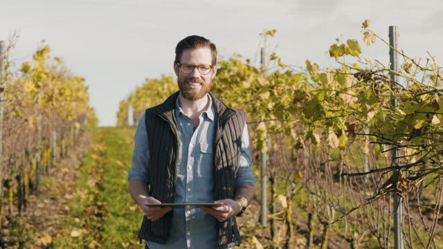 man working at a small vineyard in scandinavia - beard stock videos & royalty-free footage