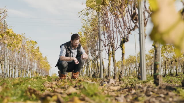man working at a small vineyard in scandinavia - manual worker stock videos & royalty-free footage