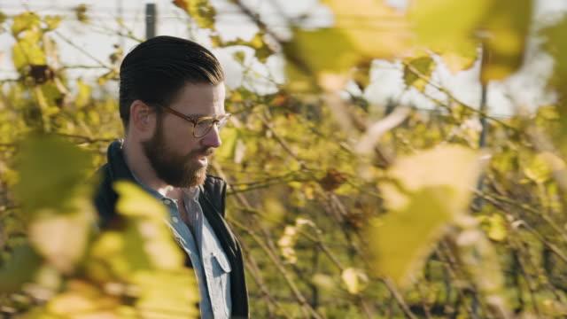 man working at a small vineyard in scandinavia - beard stock videos & royalty-free footage