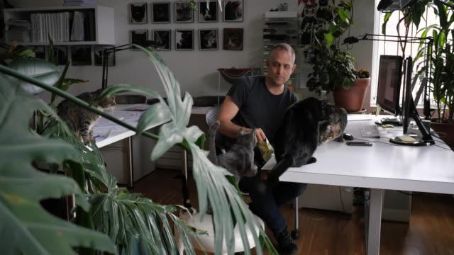 vídeos de stock e filmes b-roll de man working at desk surrounded by cats and plants - grupo pequeno de animais