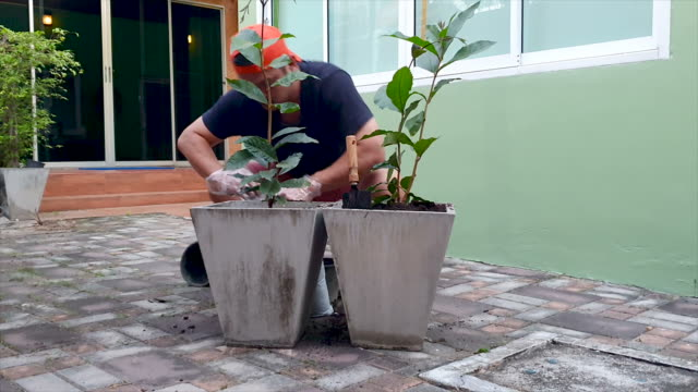 man working care tree planting in home garden - landscaped stock videos & royalty-free footage