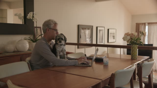 man working from home with dog - using laptop stock videos & royalty-free footage