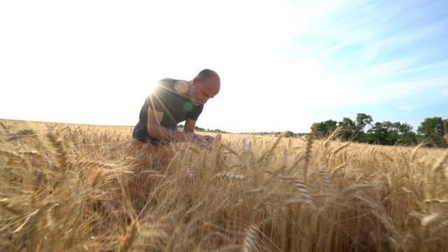 man working in corn field - crane shot stock videos & royalty-free footage