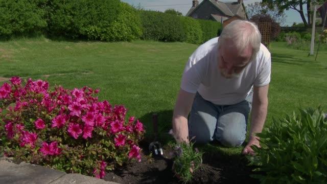 vídeos y material grabado en eventos de stock de hombre trabajando en el jardín - johnfscott