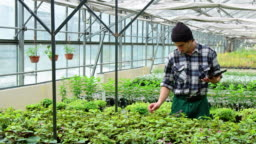 Man working in greenhouse plantation
