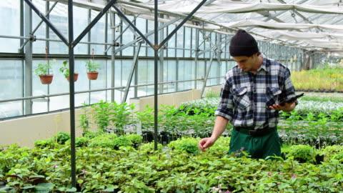 vidéos et rushes de homme travaillant dans la plantation de serre chaude - agriculture