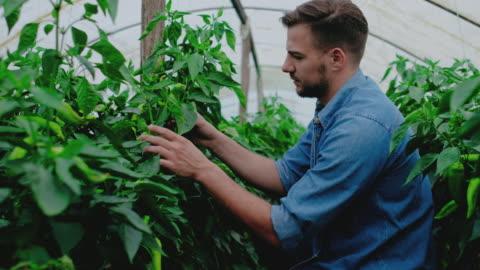 man working in greenhouse - organic farm stock videos & royalty-free footage