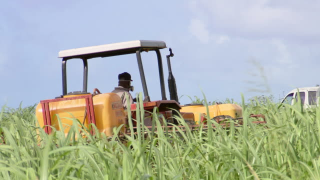 MS Man working in the filed / Brightown, Barbados