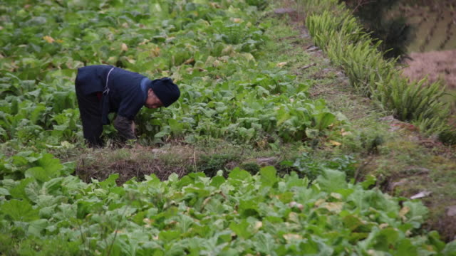 man working on fields Langde Miao Village, Guizhou, China