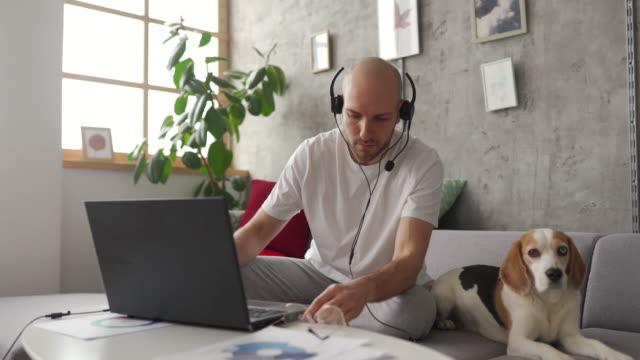 mann arbeitet auf laptop zu hause, sein hund ist neben ihm auf dem sofa - sitting stock-videos und b-roll-filmmaterial