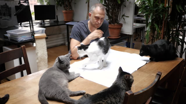 man working on plans surrounded by cats - grau stock-videos und b-roll-filmmaterial