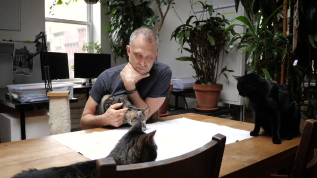 man working on plans surrounded by cats - streicheln stock-videos und b-roll-filmmaterial