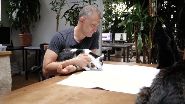 Man working on plans surrounded by cats