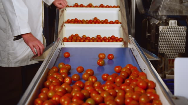 cu man working on tomato sorting machine / algarrobo, malaga, spain - quality control stock videos & royalty-free footage
