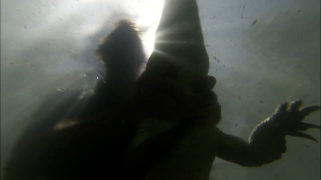 a man wrestles with a crocodile in sun brightened water. - 宇宙・天文点の映像素材/bロール
