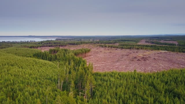 managed forest on washington coastline - aerial - stato di washington video stock e b–roll