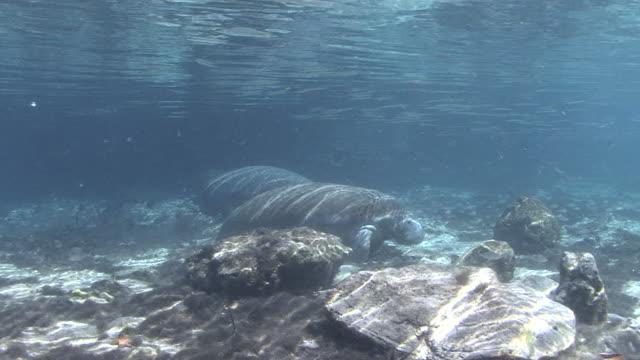 Manatee Swimmingpool