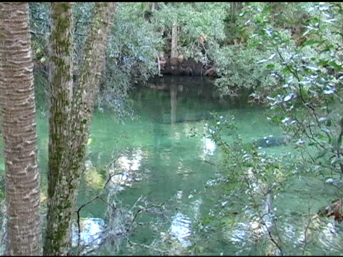 manatees in the water - aquifer stock videos & royalty-free footage