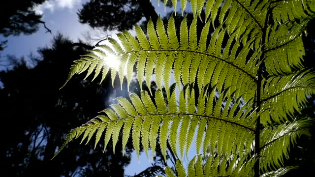 mangonui - fern stock videos & royalty-free footage