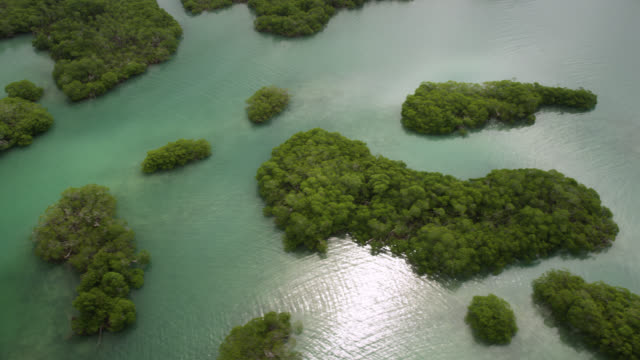 mangrove forest and coral reefs on coast, belize - caribbean sea stock videos & royalty-free footage