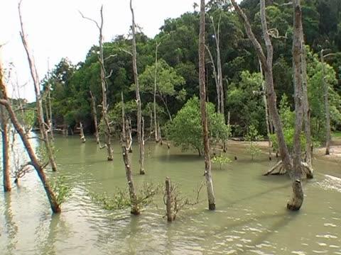 マングローブの森の木 - サラワク州点の映像素材/bロール
