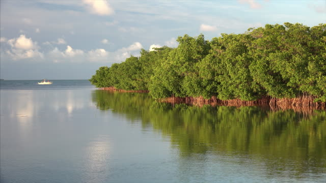 stockvideo's en b-roll-footage met mangrove forest grows to the edge of ocean in the florida keys - the florida keys