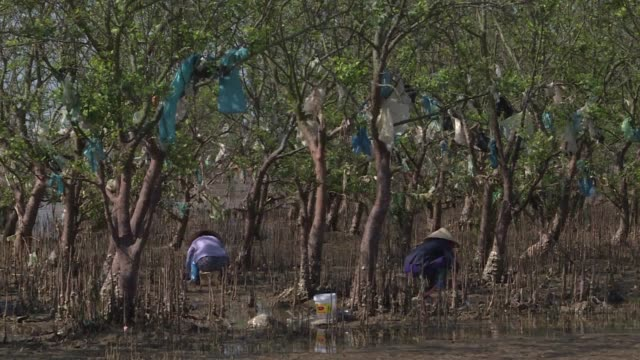 a mangrove forest in vietnam's thanh hoa province is draped with plastic rubbish washed in with the tide a symptom of the plastic crisis that has... - symptom stock videos and b-roll footage