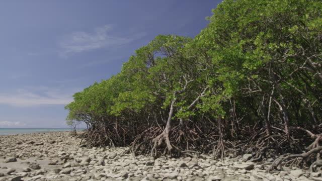 Mangrove forest on rocky coast