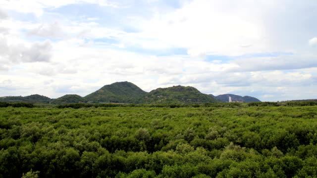 mangrove forest (time lapse). - reforestation stock videos and b-roll footage