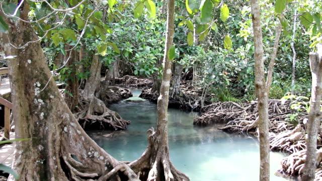 Mangrove forest (Tha Pom Klong Song Nam, Krabi, Thailand).