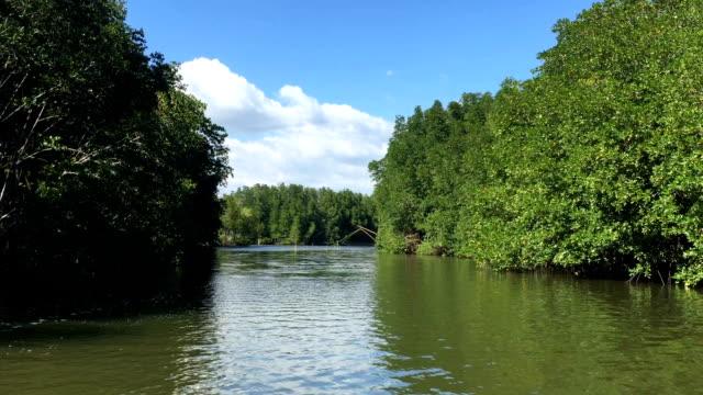 vidéos et rushes de vdo hd : forêt de mangrove - bras mort de cours d'eau