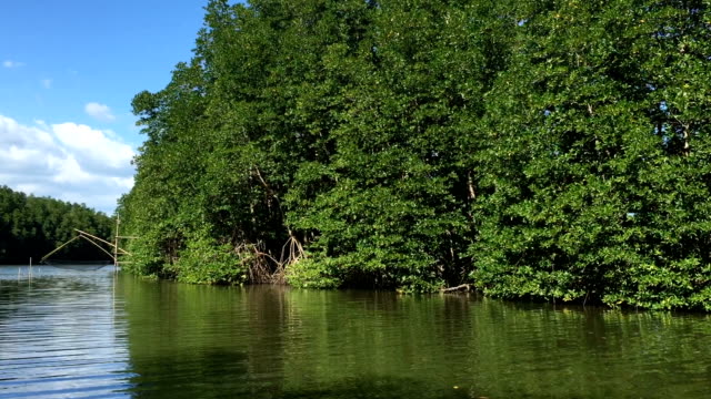 mangrove forest - backwater stock videos & royalty-free footage