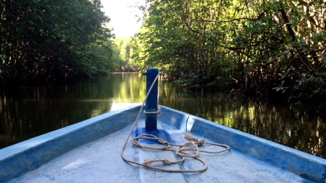 hd vdo : mangrove forest - backwater stock videos & royalty-free footage
