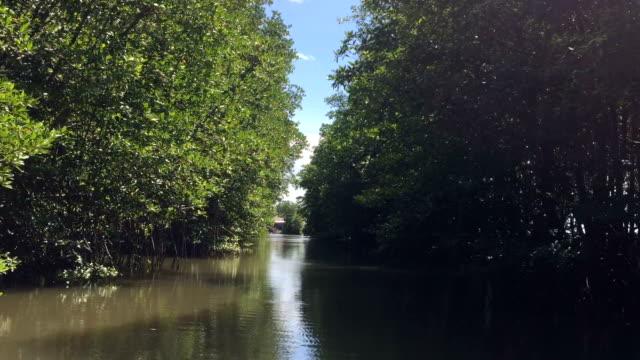 hd vdo: mangroveskog - uppdämt vatten bildbanksvideor och videomaterial från bakom kulisserna