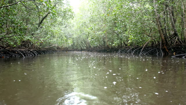 mangrove forest wetland ecosystem, indian ocean coast of east africa - mangrove tree stock videos & royalty-free footage