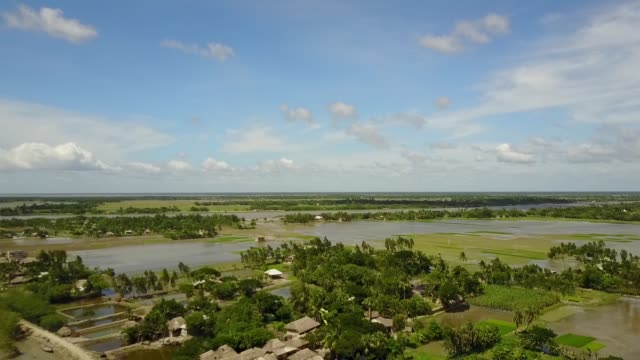 vídeos de stock e filmes b-roll de mangrove forests and rice fields spotted on the islands of sunderbans, india - árvore tropical
